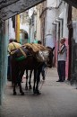 These horses, mules would be left to stand while their owners were selling their wares.