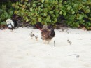 Chicks on the beach!