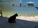 Cats are everywhere in Greece!