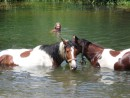 claude swimming with our horses