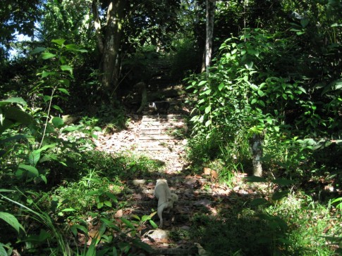Jungle path and staircase dating back from the yellow fever epidemic
