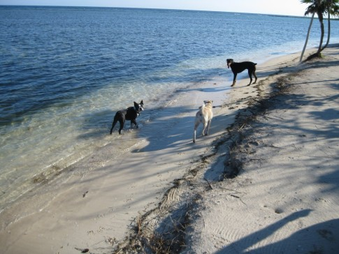 Pups on the beach at Barefoot Cay Marina