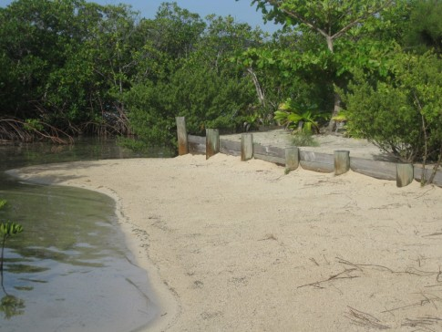 Mangrove beach, Barefoot Cay (one of the cleanest places we have seen!)
