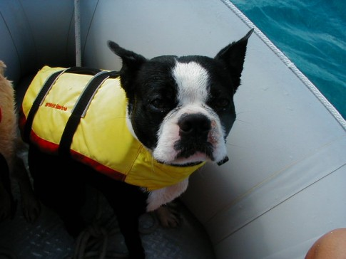 Bodee in his life jacket, Staniel Cay