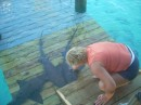 Karen petting the sharks at Compass Cay