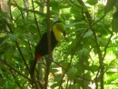 A Toucan that was in the courtyard of the Santa Clara hotel.