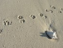 Footprints: Leave nothing but footprints... (that means you have to clean up your poo)