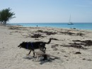 2 - Bimini: #2 Bimini Bahamas. Great beaches and somebody makes piles of wood to pee on every few hundred yards!