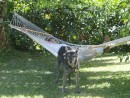 Dog Hammocks: There never seem to be any.