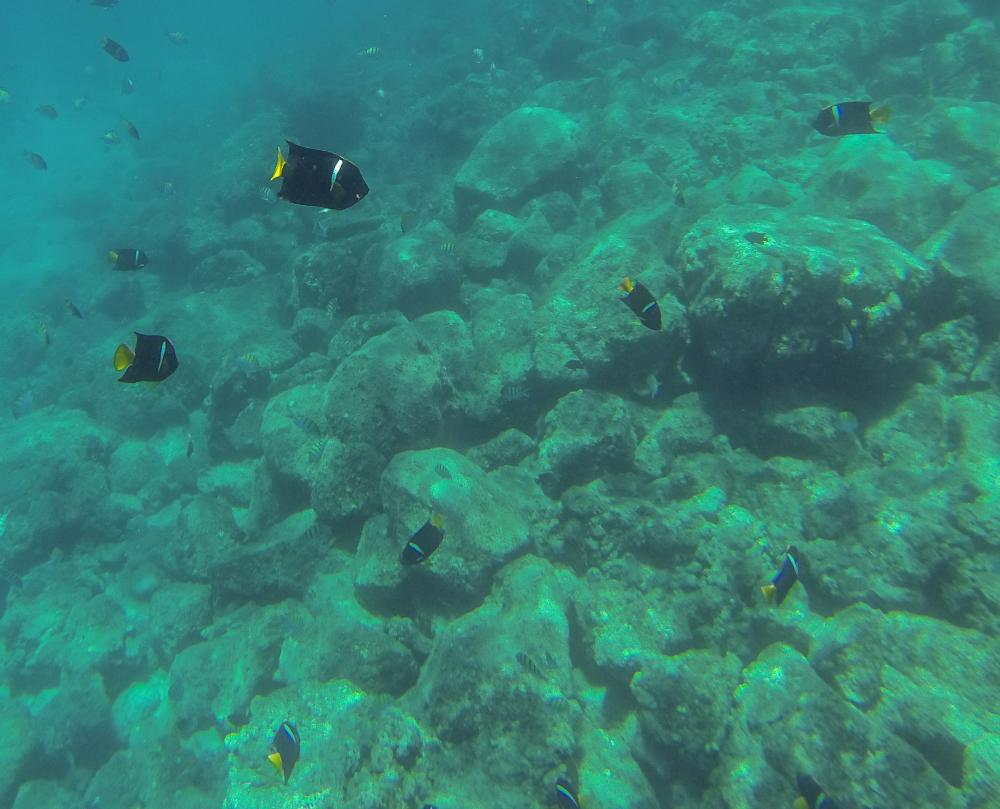 San Evaristo northbound: Snorkeling