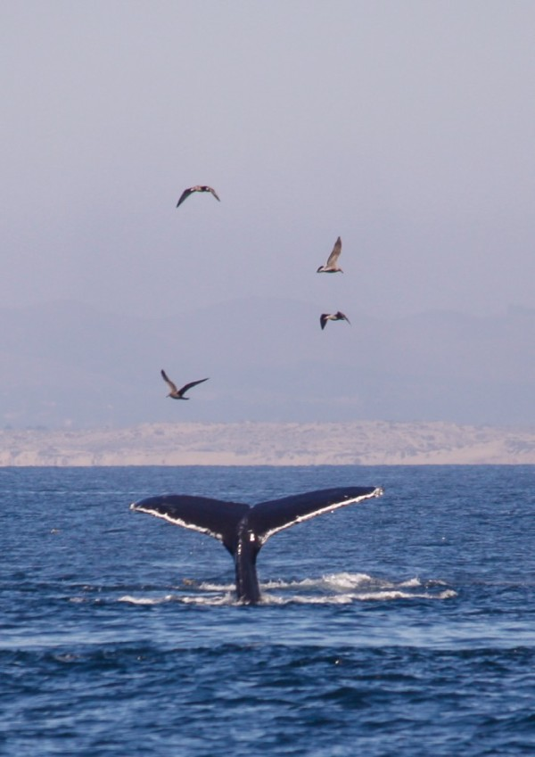 Just whales.  Ho hum.