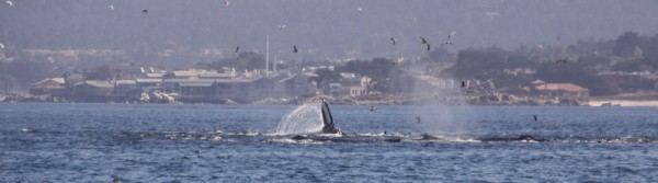 Whale Melee