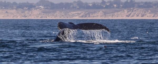 Bye bye, whale-style.