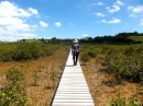 And boardwalks to cross the mangrove swamps