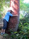 "Darlene hugs the ""gringo"" tree.  It is red and peelling!"
