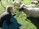 Karyn get to know the sheep.  This one is Lucy