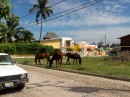 Go to the Capitania del Puerto to check in and encounter horses in town