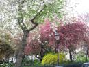 trees are blooming: London