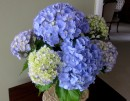 Hydrangeas from the garden