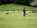 Dog Trials