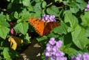 So many colourful butterflies...