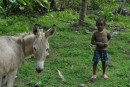 A young Dominican boy and his donkey