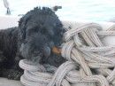 Ahh, my pile of ropes, my bone and I