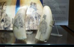 Whale tooth Scrimshaw