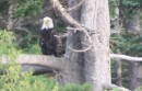 My Eagle friend in Maskell
