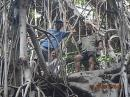 Up a banyan tree: the world