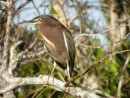 Dr. Johns bird Pics from the Everglades