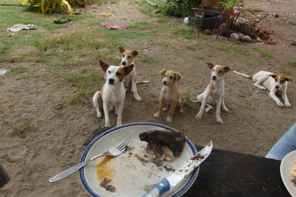 Hungry Canines