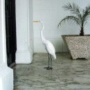 Heron on the Presidential porch