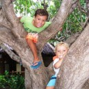 Luke and Josh up a tree