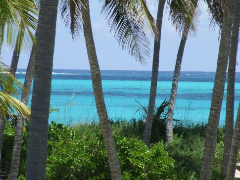 "A view of the ocean through the palm trees next to the house named ""Costa Lotta"" on Man-O-War Cay."