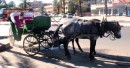 Taxi horse and cart