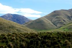 Central Otago tussock country