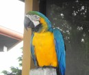 Pet Parot - loved the color