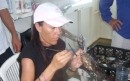 This is Angel, our guide and peral guru, extracting a pearl with surgical precision