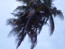 The infamous three headed palm tree. The only known one in the southern hemisphere.  Voodoo crazy...