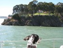 Suki takes in the view of the coast guard station on Yerba Buena Island in San Francisco Bay.