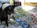 Mickey is feeling a little overwhelmed at all the work putting the lines back together after pulling the mast.