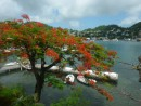 Flamboyant Tree at the yacht club