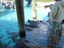 Feeding the pet sharks