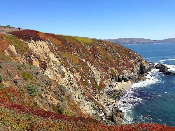 Multi-color Ice Plant at Bodega Head, looking south