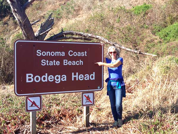 Welcome to Bodega Head!