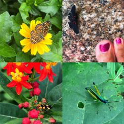 There were SO many butterflies at the Vallarta Botanical Gardens, every color, size, and shape.  We didn