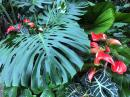 "Antheriums and other ""indoor plants"" at home grow everywhere here in the tropics."