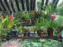 Tropical Plants in Mexican pots, just one of the lovely displays at the Vallarta Botanical Gardens.