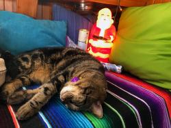 Tosh napping by Santa to ensure he doesn